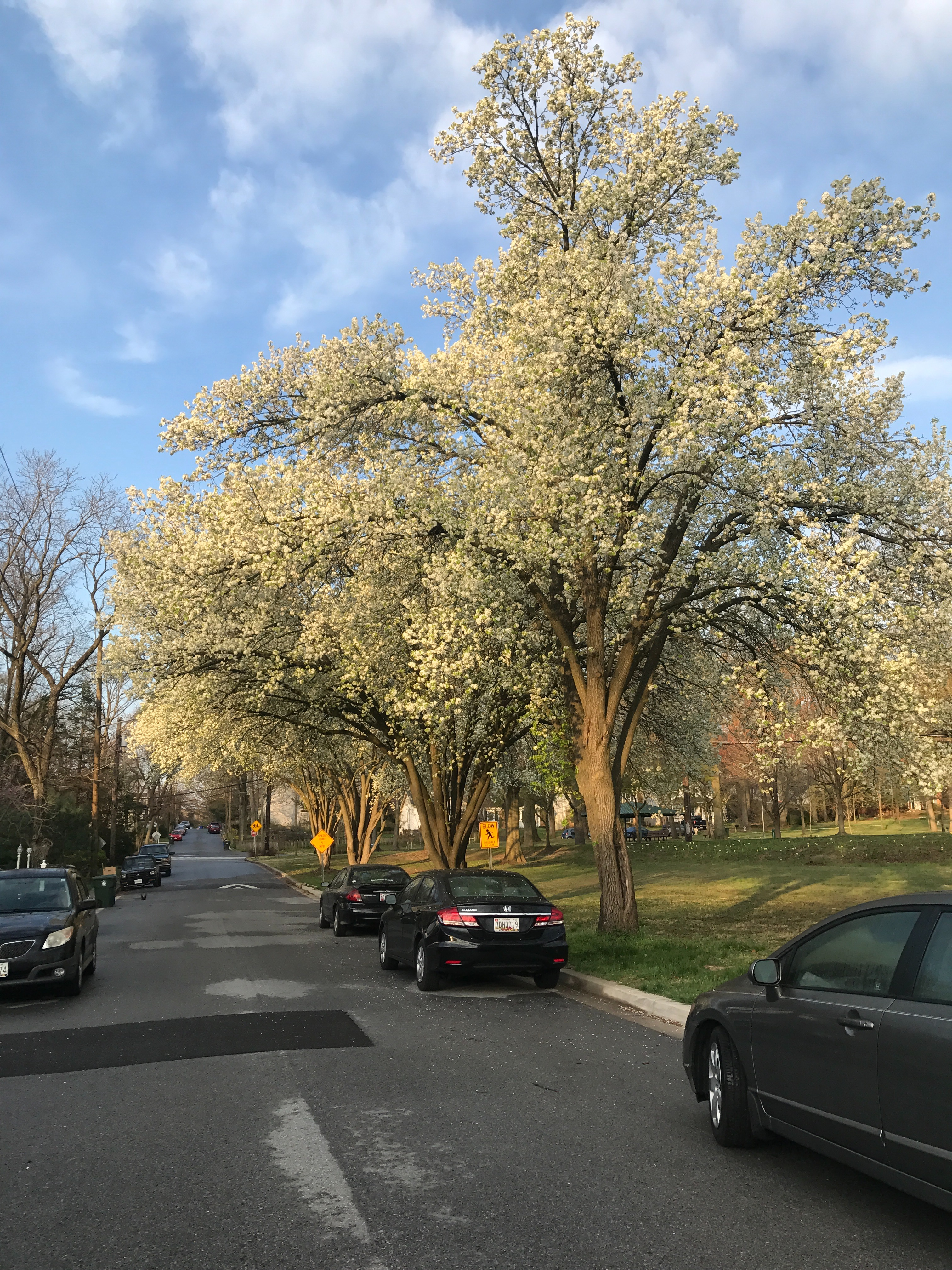 Spring in Berwyn